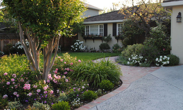 Some Of My Favorite Plants For So Cal Gardens Jackie Gibbins Orange County Real Estate