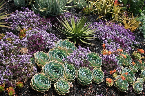 Adding Water-Wise Plants to YourGarden