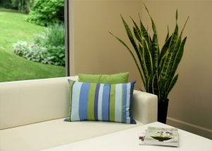 Sansevieria Looks Great in the House