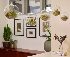 This is a new trend in indoor plants.