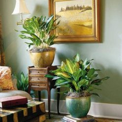 Big beautiful Chinese Evergreens in gorgeous pots add a rich look to this home.