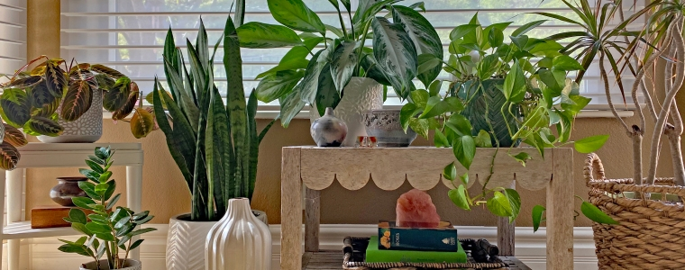 Jackie Gibbins House Plants