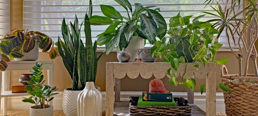 House Plants in the House!
