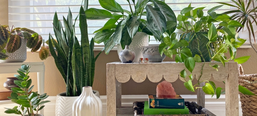Plants Add Life to Your Home'sInterior